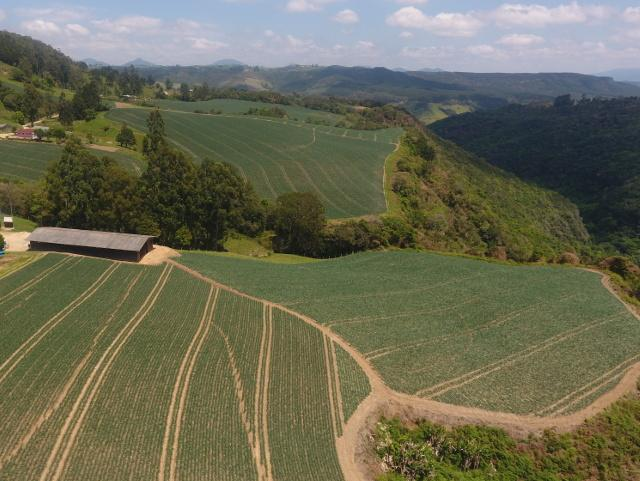 Santa Catarina tem boa safra de cebola, apesar das adversidades climáticas